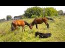 КОНЬ Выйду ночью в поле с конем Хор Сретенского монастыря