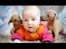 Дети и животные 2 ● Приколы с животными осень 2014 ● Dogs, Cats Cute Babies Compilation ● Part 2