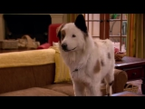 Собака точка ком 1 сезон 10 серия