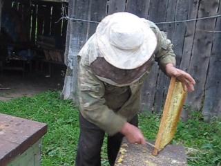 Пчелки  с нашей   пасеки 2015