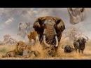 Загадочный мир диких  животных. Документальный фильм 2016 в хорошем качестве HD
