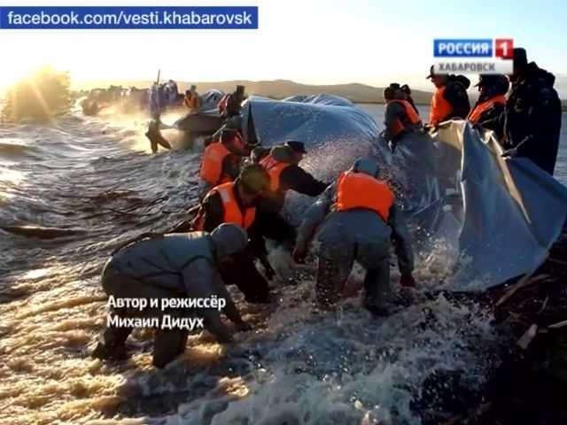 Вести-Хабаровск. Фильм Живая стена