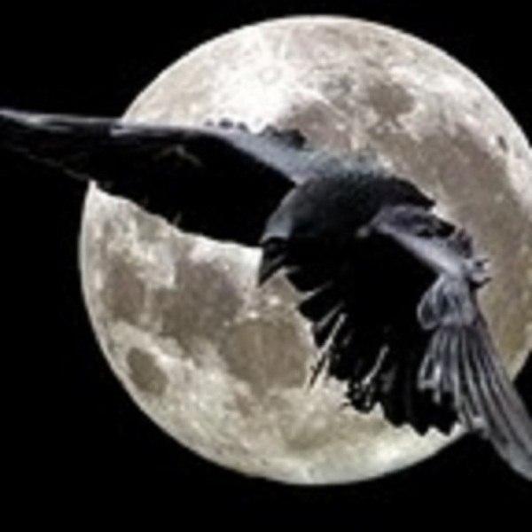 Подбросили под двери мертвую птицу - Страна Мам