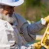 Петропасека - мед и пчелопродукты