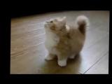 Самые смешные коты. Улетные животные. Видео приколы про котов самые смешные  Супер смешные коты