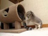 Голодный кролик атакует