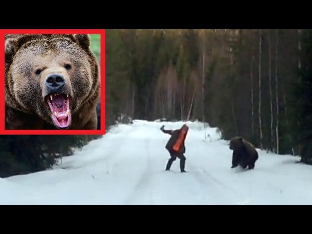 Отпугнуть медведя Наглядное пособие по выживанию