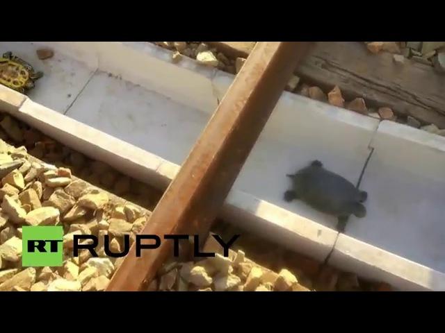 Japan Tunnels built to prevent turtles being crushed by trains