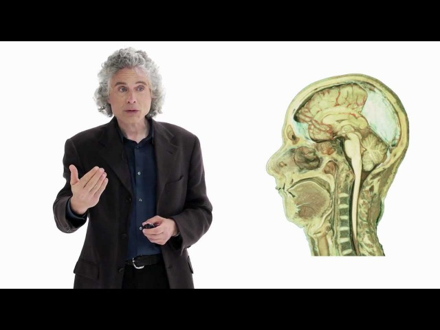 Steven Pinker Linguistics as a Window to Understanding the Brain
