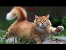 The Waltzing Cat by Leroy Anderson