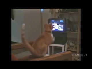 Эти забавные коты и кошки