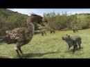 Документальный фильм Хищная птица ящер Интересный фильм про ящера