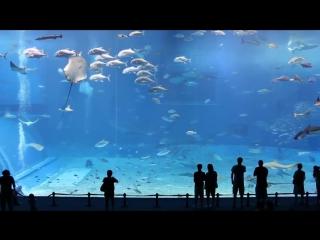 Дубай Молл Аквариум - самый большой аквариум в Мире!