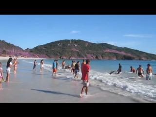 В Бразилии туристы спасли 30 дельфинов выброшенных на берег