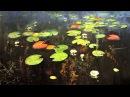 Футажи ♥ Красивые цветы ♥ Живая живопись. Лилии. Live-Malerei. Die Lilien.