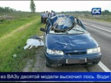Девушка погибла в ДТП с лосем. The girl died in road accident with an elk