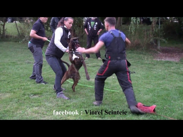 Schutzhund seminar in Germany Sv Og Nubbel 2016 with Viorel Scinteie