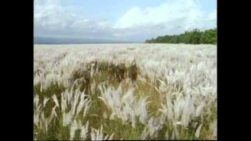 Опыление растений ветром