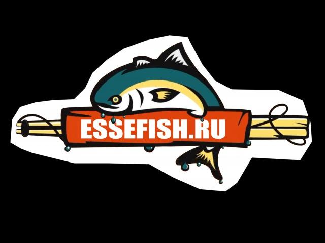 EsseFish. Третий Турнир EF по спиннингу с берега. Репортаж СТС