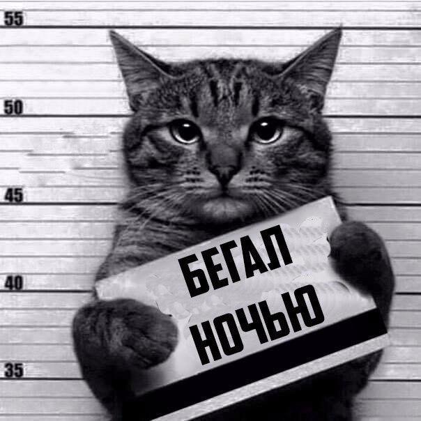 Айнур Гарипов - фото №1