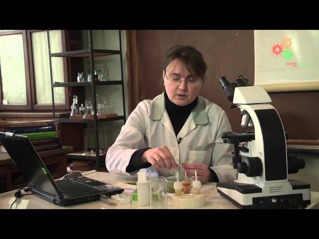 Анатомия растений. Изготовление и изучение поперечных срезов растений (М.Нилова)