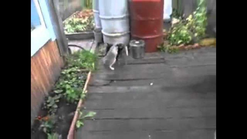 Собака каждый день тащит кошку на спине домой