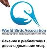 Ассоциация любителей птиц СПб