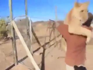 Завоевать сердце львице способен лишь настоящий мужик