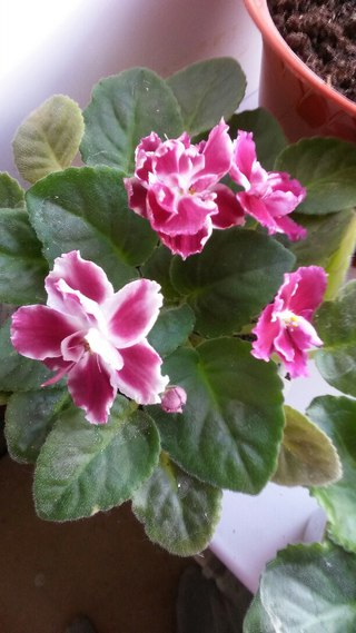Цветы комнатные пенза