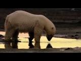 Wild Russia - 2 - Arctic Россия От Края До Края - Арктика - 3/3