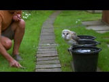 Cute Barn Owl Learns How To Fly - Super Powered Owls - BBC
