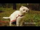 Подборка приколов про котов Ржака до слёз смотреть всем