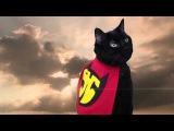 Super Hero Cat (Official Music Video) - N2 the Talking Cat S2 Ep18