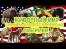 Животные Америки. Как говорят животные Развивающие мультики для детей.