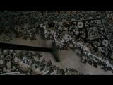 Чистка ковров и мягкой мебели с выездом на дом