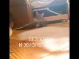 Без кота и жизнь не та!!))