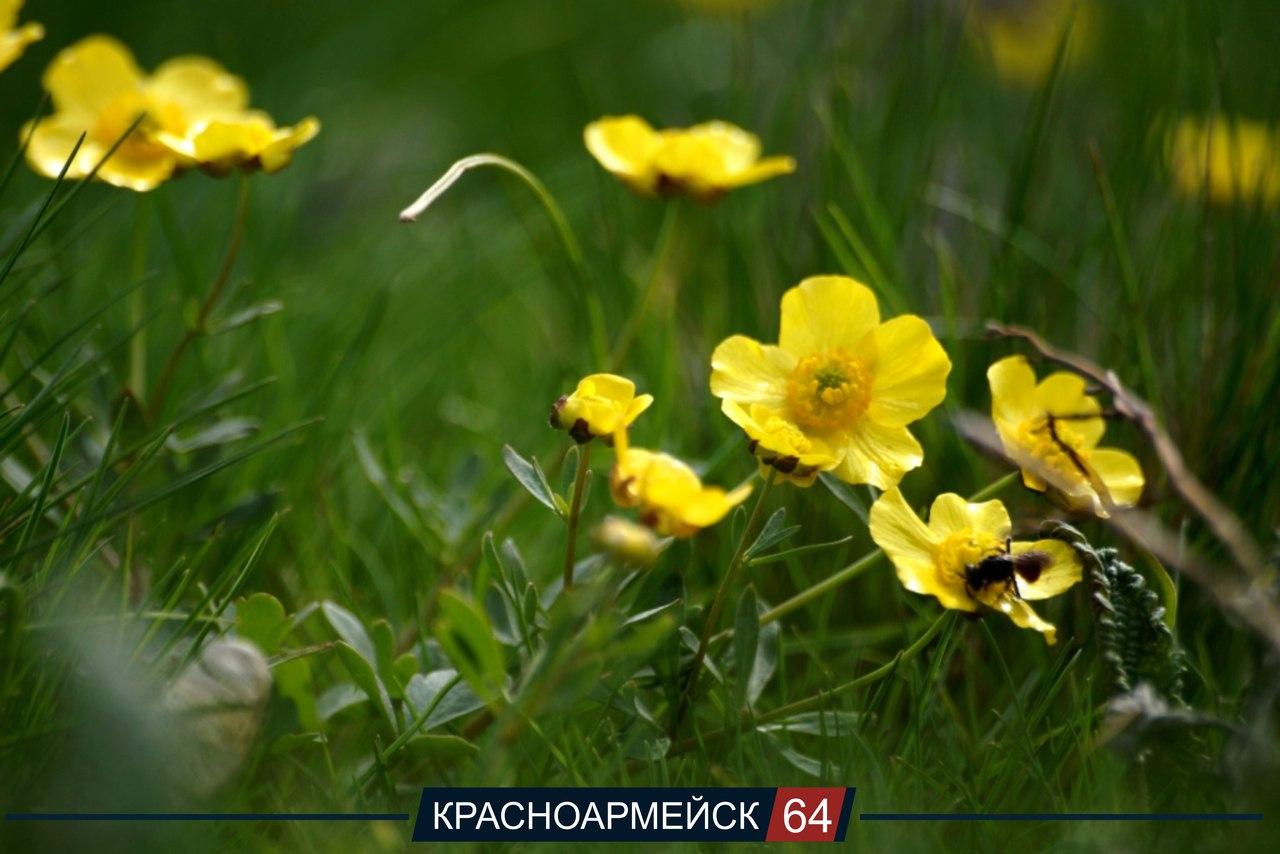 Весна в Красноармейске. Авто: Елена Шубко