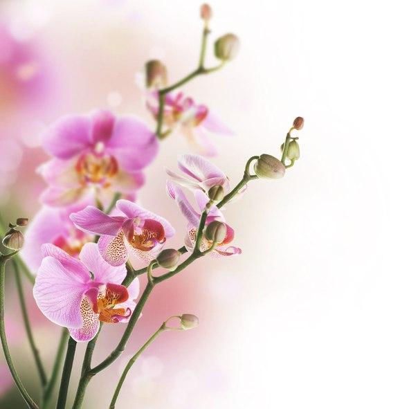 От всей души поздравляем милых девушек с 8 марта! Пусть все у вас будет хорошо!...
