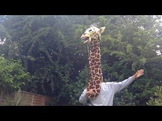 Giraffe: diving giraffes, High Diving Giraffes, Giraffic ... - photo#11