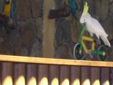 Шоу попугаев в Палмитос парк