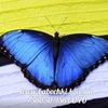 Живые бабочки/Live butterflies