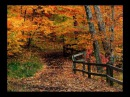 The Autumn Leaves By Nat King Cole