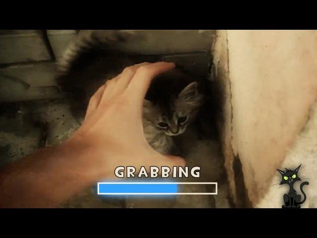 Grab The Cat!