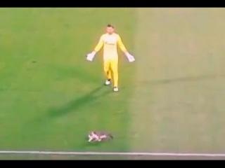 Кошка выбежала на поле и Лодыгин сыграл на выходе. Зенит - Тосно (5:0)
