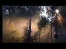 Пение птиц в лесу. Релакс.