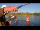 Чехонь, ловля чехони на резинку, спиннинг видео на Дону 2015
