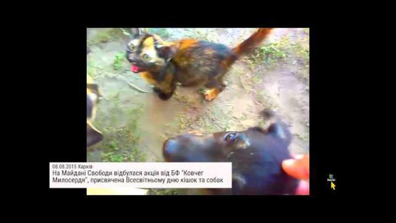 Знайди друга на Майдані Свободи роздають безпритульних тваринок