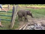 Маленький слон испугался козу