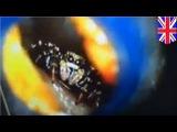 Певица Кэти Мелуа проснулась с пауком в ухе