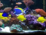 P&ampP Tropical Fish - Beautiful Salt Water Fish Tank Marine Aquarium with Live Rock